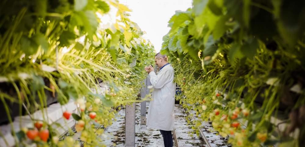 NiederlandeTag 2021: Digitalisierung in der Agro- und Foodindustrie